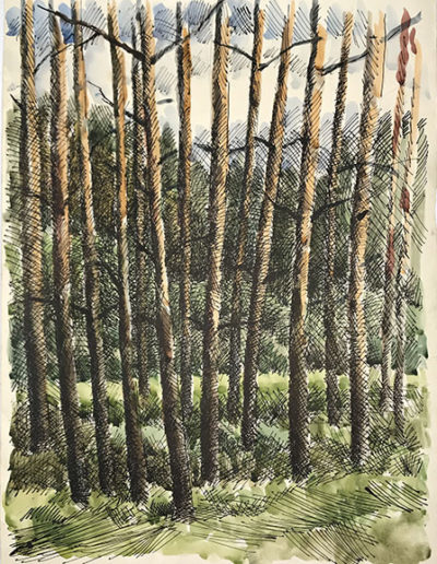 """""""Сосны. Рыжие стволы"""" из серии «Деревья» 1985г. Бумага, акварель, тушь. 61х43 см"""