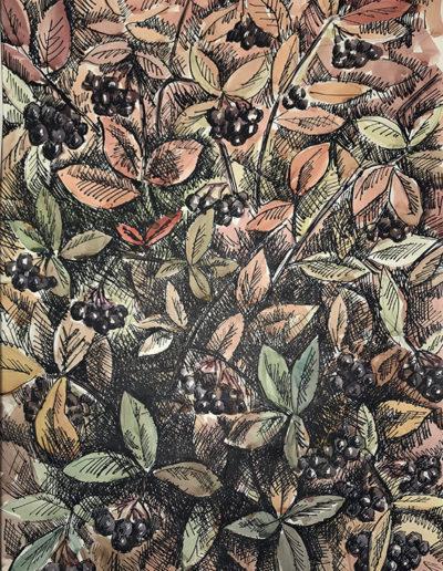 «Черноплодка» из серии «Деревья» 1985г. Бумага, акварель, тушь. 69х49,5см