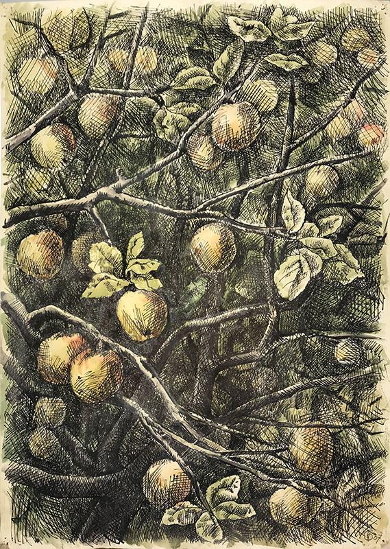 «Яблоня» из серии «Деревья» 1985г. Бумага, акварель, тушь. 69х49,5см