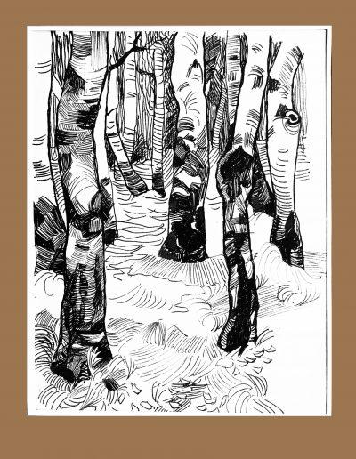 """""""Деревья. Березы"""""""