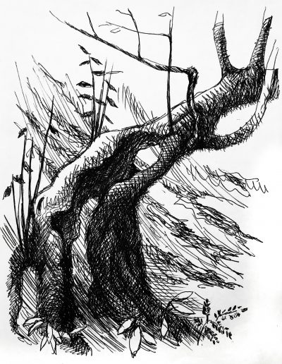 """Набросок. """"Лес в горах №3"""""""