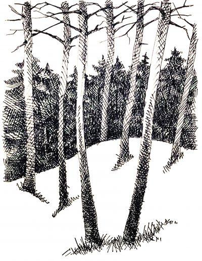 """Финский залив. """"Деревья"""""""